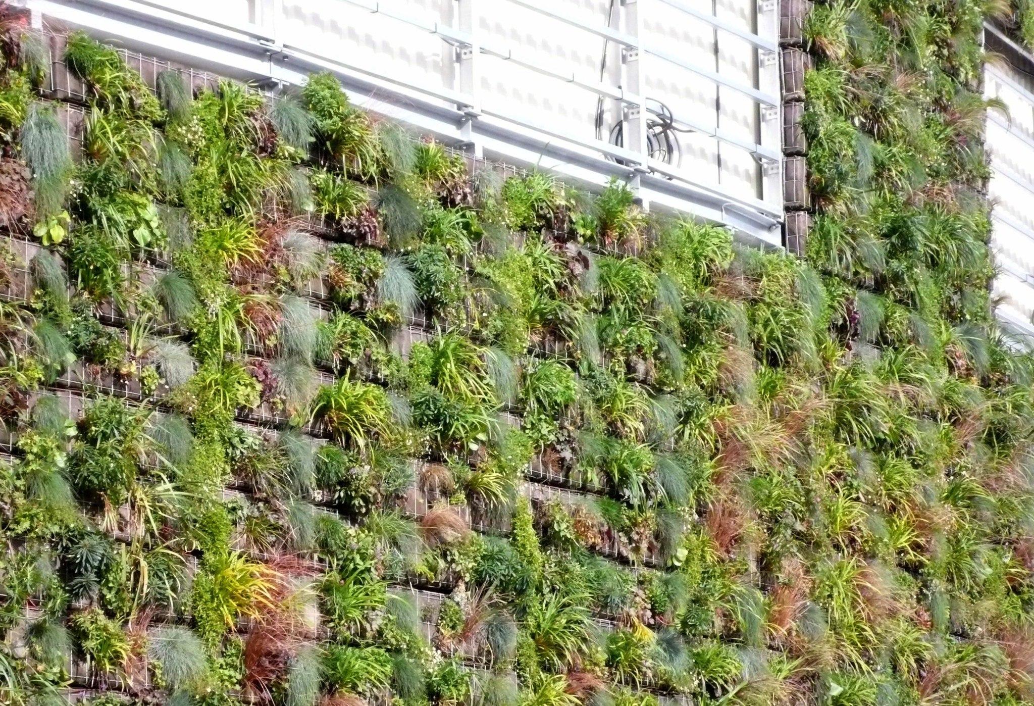 Plantes Pour Mur Végétal Extérieur créer un mur végétal