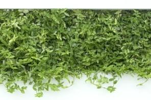 Qu'est ce qu'un mur végétal ?