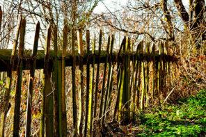 Clôturer son potager avec une ganivelle : la clôture tendance