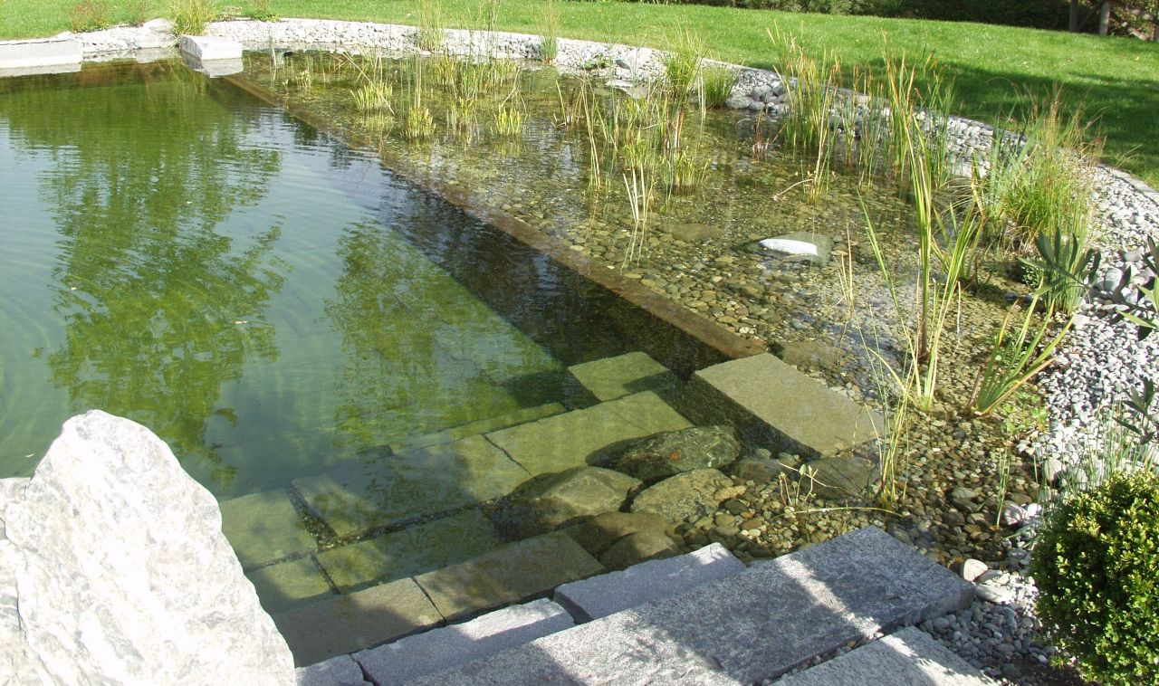 Une piscine naturelle pour le jardin for Jardin bio