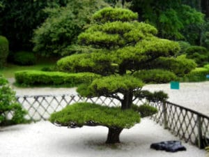 abattage-taille-arbre-parc-jardin