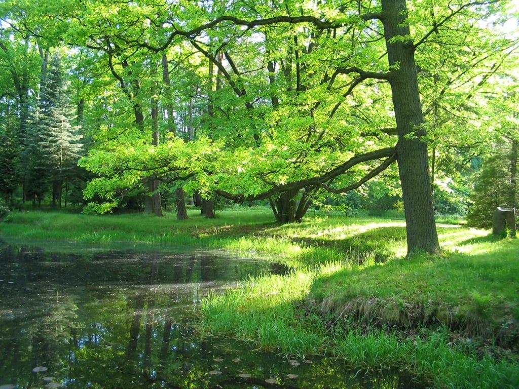 taille-arbre-parc-jardin